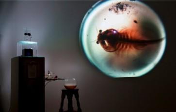 Referencia-Obra-Previa-Título_Artemiidae-630x403